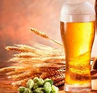 теплое пиво от простуды