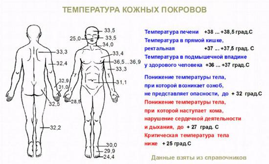 Какая температура на разных участках тела