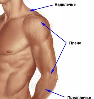 Изображение - Застудил плечевой сустав produlo-plecho-3